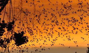 bats-houston